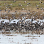 Mixed-Flock-3
