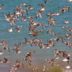 Mixed-Flock-4